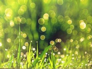 green-nature.jpg