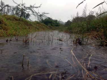 A full swale and a happy heart knowing that all this water is slowly going to penetrate the soil and facilitate an abundance of new life