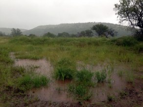 The soakage pond doing a good job of increasing the capacity of the highest level of earthworks. In total the top swale connected with this pond can stop and soak 800 000L of water in a large rainfall event