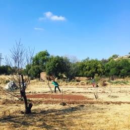 Preparing the new garden with broadforks
